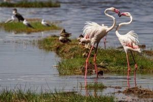 aves-amor-flamenco-rosa-corazon_0_o