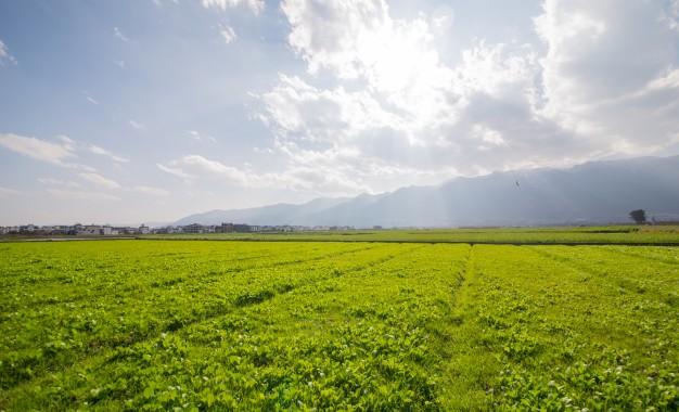 paisaje-de-pradera-soleada_1112-307