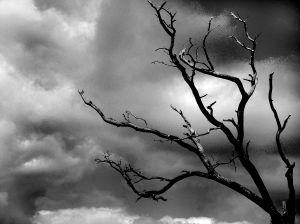tormenta-arbol_2357980