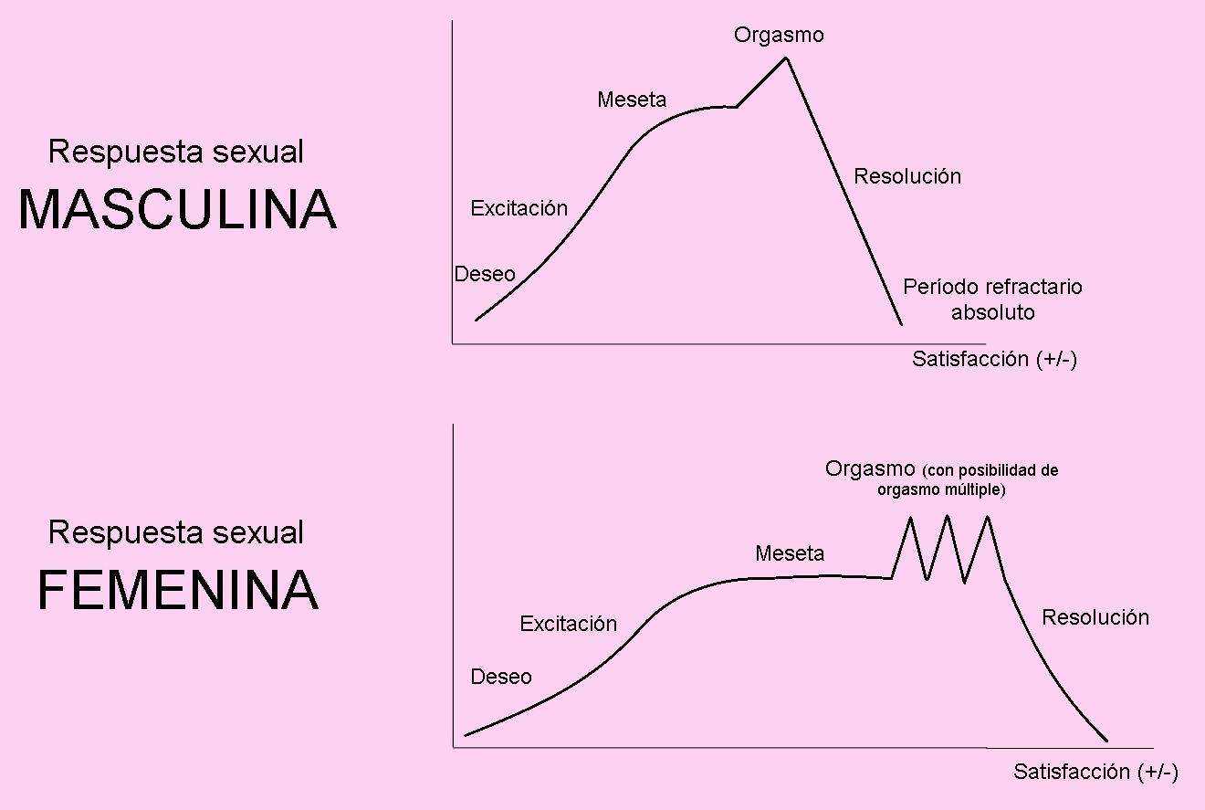 El ciclo de la respuesta sexual - Psicólogos en Valencia